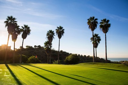 Tall palm trees surround the green on this hole at Añoreta Golf